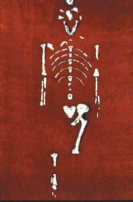 Lucy'nin bulunan kemikleri.jpg