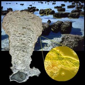 stromatolites fosili