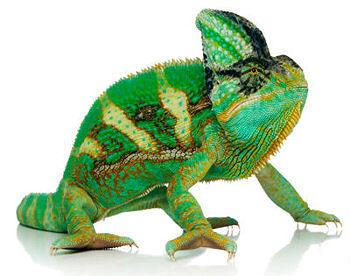 Sürüngenler ve Reptiller