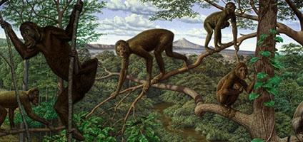 Miocene Ape: Proconsul