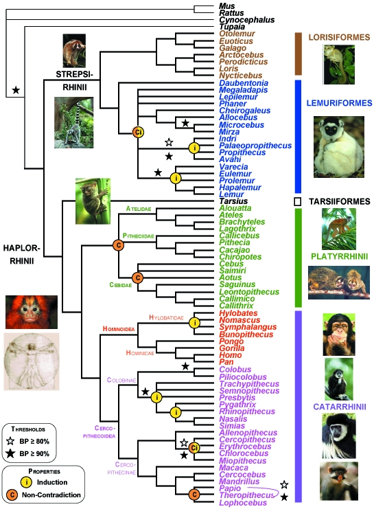 SB-Primates_Genres_S70_PhySIColor