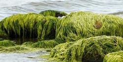 bald-flugzeug-sprit-aus-algen-foto-srt-huber-
