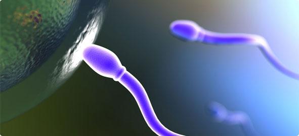 sperm-yumurta-bulusmasi_591x270