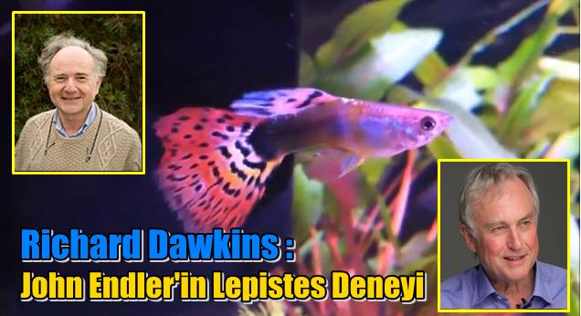 Video: Richard Dawkins Anlatıyor - Evrime Dair Bir Kanıt - Lepistes Deneyi ve Doğal Seçilim
