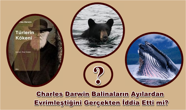 Charles Darwin ayilarin balinalardan geldigini gercekten iddia etti mi