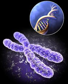 chromosomes-702377