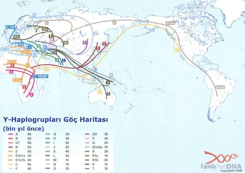 Y-Haplogrubu_Göç_Haritası_ftDNA