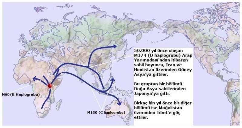 Y-Map.2